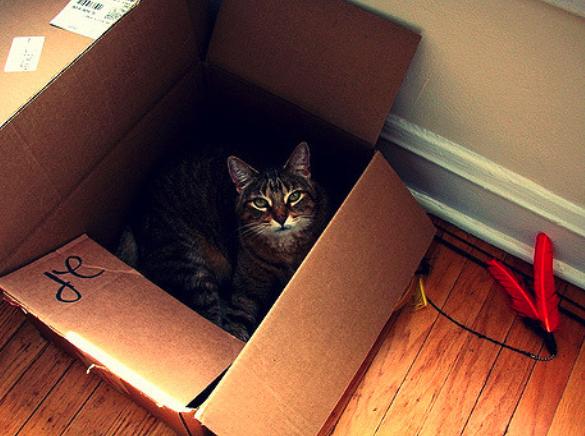 Katze in einem Umzugskarton